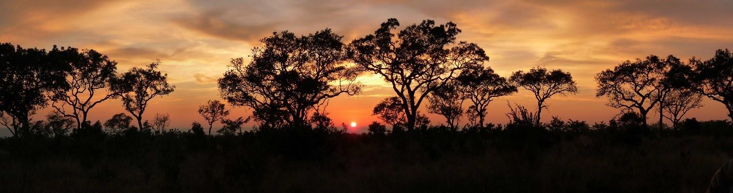 Moja Afrika